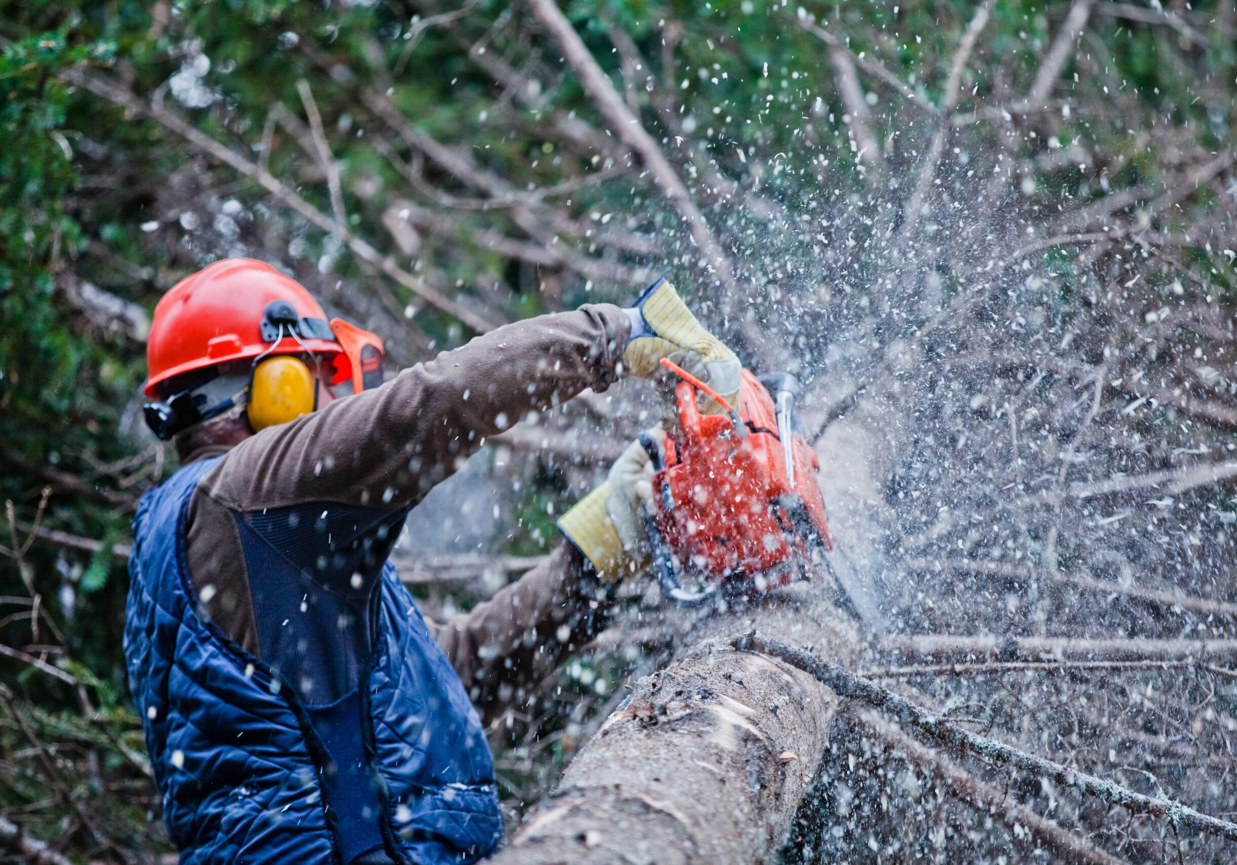 Lakewood tree removal